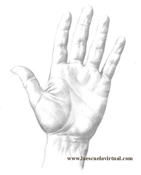 Como Dibujar Manos En Diferentes Posiciones Su Forma Y